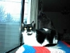 new-kitties-2003